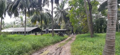 FARM AND COCONUT STATE in HIRIPITIYA 17 acres (12,5 Deed+ 4,5 reservation)